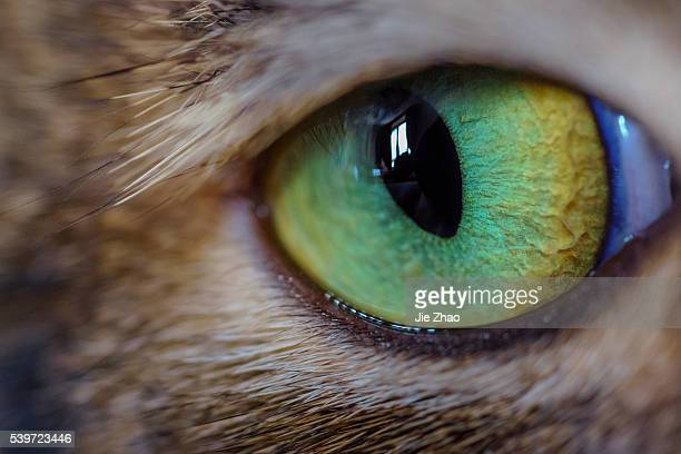 The eye feature of a cat in China on 24th Jan 2016