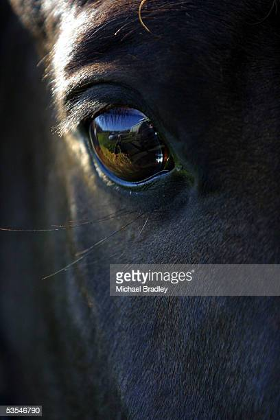 The eye of a horse at its stables in Auckland Tuesday