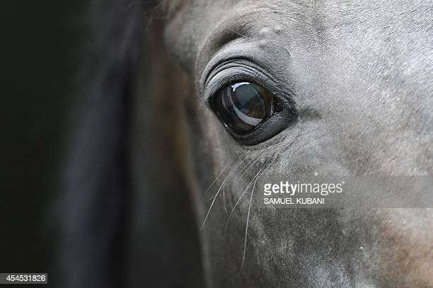 The eye of a horse is seen during a training day at Vampil yard, near Malacky, Slovakia on September 3, 2014. AFP PHOTO/SAMUEL KUBANI