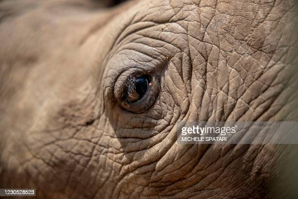 The eye of a rhino calf is seen at the Rhino Orphanage in an undisclosed location near Mokopane, Limpopo province, on January 9, 2021. Carefully...