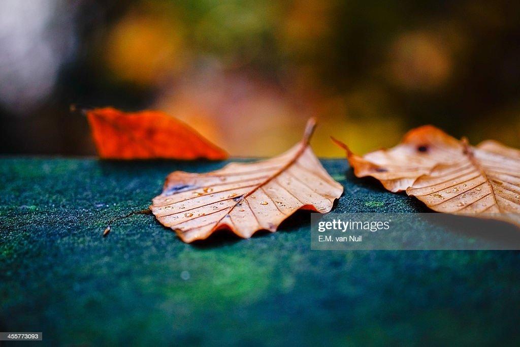 The Fall : Stockfoto