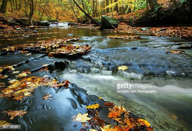 The fallen leaves float away in water