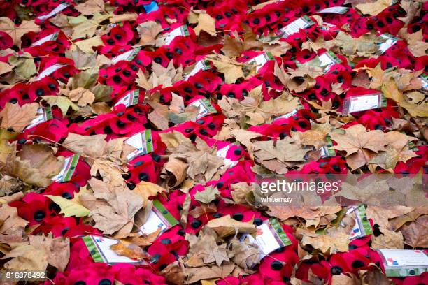 the fallen - memorial wreaths and autumn leaves - poppies stock photos and pictures