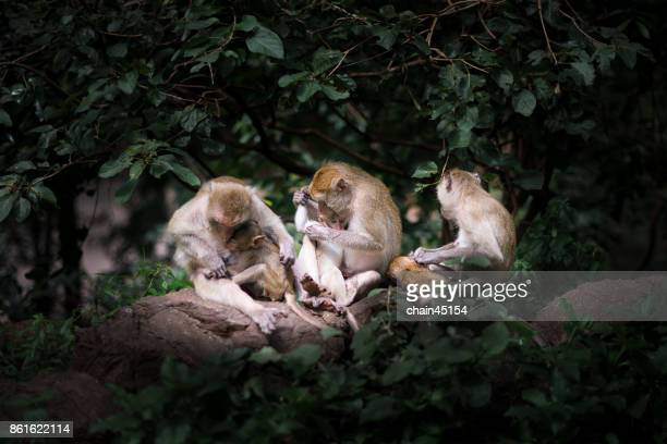 The family of monkeys in the forrest.
