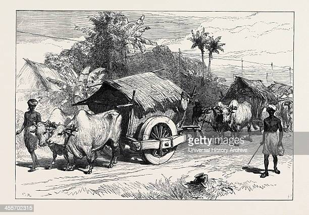 Bullock Hackeries For Carrying Grain 1874