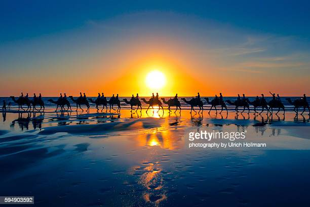 the famous camel train, cable beach, western australia - camel train stock pictures, royalty-free photos & images