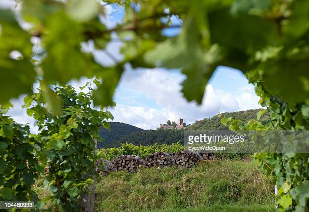 The famous Castle Landau on a hill with a view of the vineyards and the Weinstrasse a well known route for tourists where they can try every kind of...