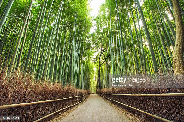CONTENT] The famous Kyoto Bamboo Forest in Arashiyama Area during a tranquil morning