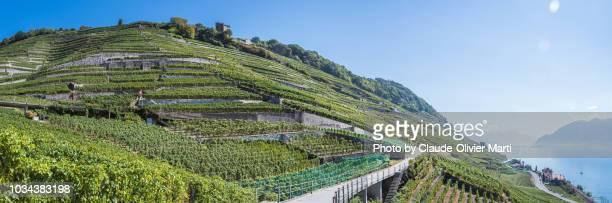 the famous lavaux vineyard terraces - ヴォー州 ストックフォトと画像