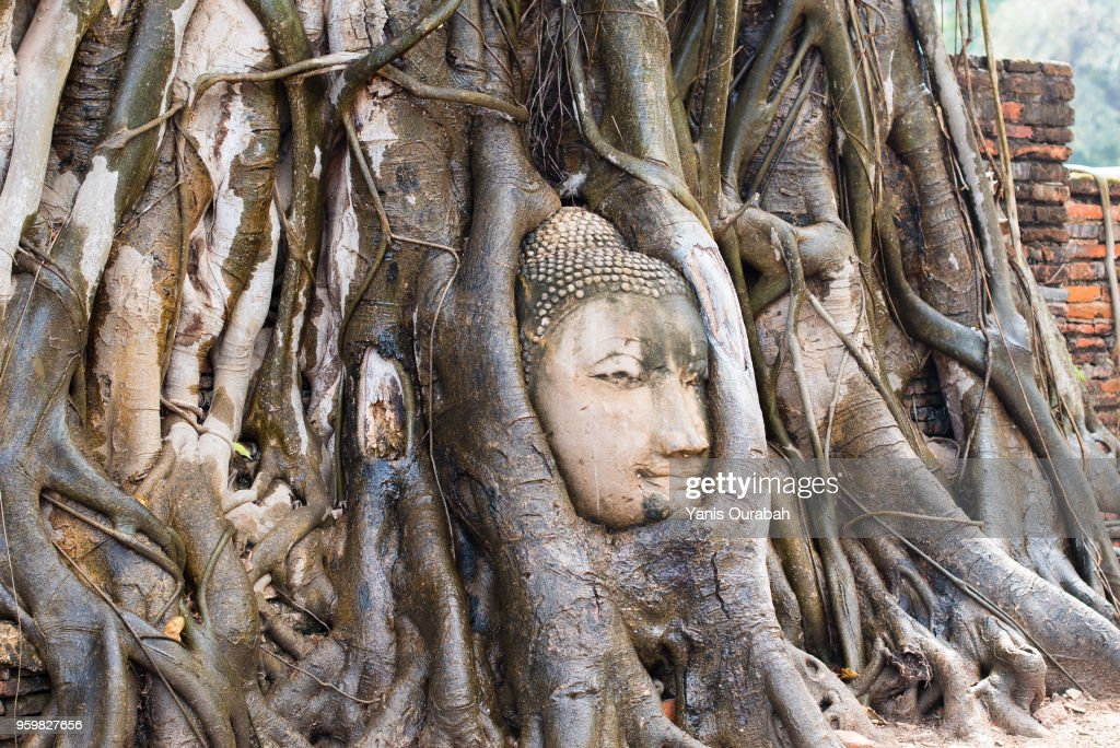 The famous Thai Buddha's head in the tree roots in Ayutthaya : Stock-Foto