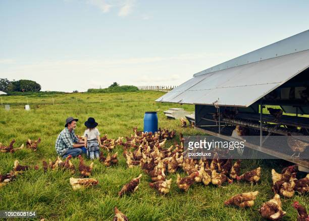 the farm will be yours when you grow up - organic farm stock pictures, royalty-free photos & images