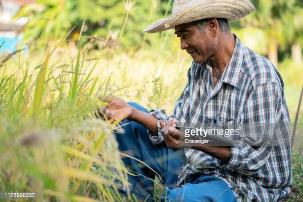 the  farmer examines the field of cereals and sends data to the cloud from the tablet. smart farming and digital agriculture. - スマート農業 ストックフォトと画像