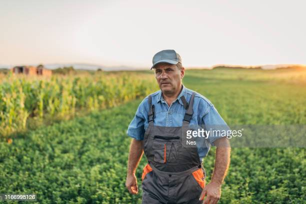the farmer inspects the agricultural field - cher stock pictures, royalty-free photos & images