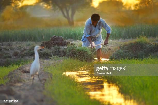 シンド・パキスタンの農夫 - スィンド州 ストックフォトと画像