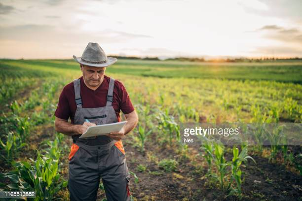 o agricultor registra o crescimento do milho - representar - fotografias e filmes do acervo