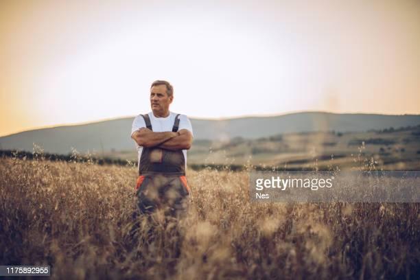 el agricultor ve el campo de cultivo de trigo - región central de eeuu fotografías e imágenes de stock