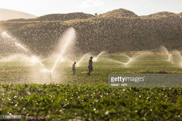 the farmer watering with sprinklers - sprinkler system stock pictures, royalty-free photos & images