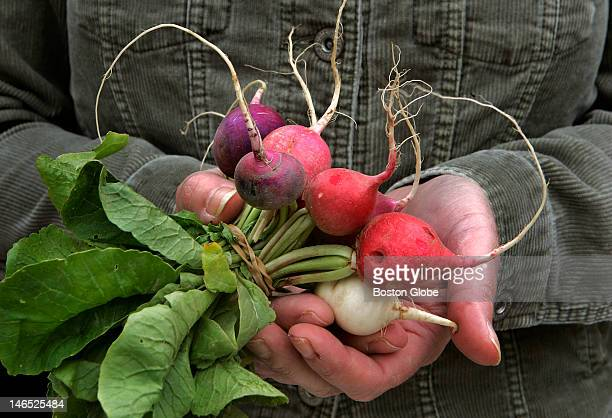 The Farmers Market in Copley Square opened today Tuesday May 23 and customers were buying despite unseasonably cold weather Radishes of many colors...