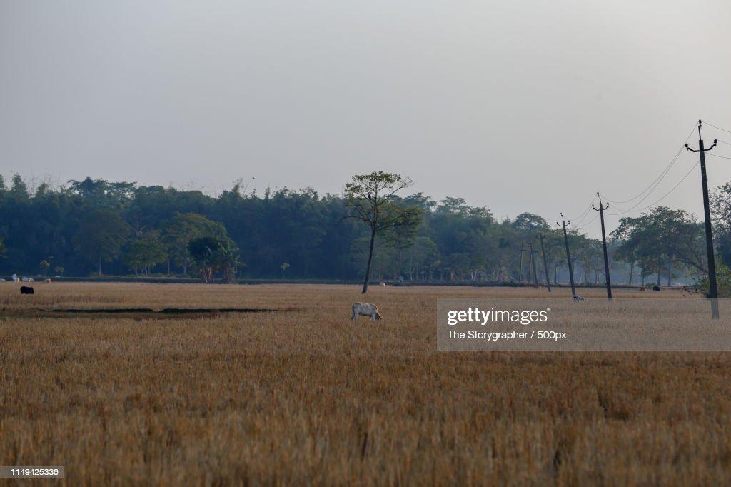 The Farmland : Stock Photo