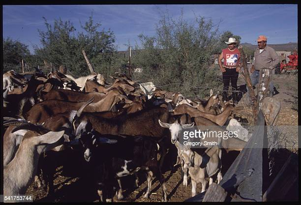 The father of slain teenager Ezequiel Hernandez Jr tends to the family goats In May of 1997 eighteenyearold Hernandez was out grazing his family's...