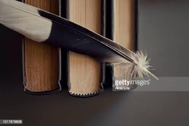 the feather - literatur stock-fotos und bilder