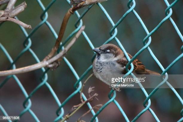 the fence sitter
