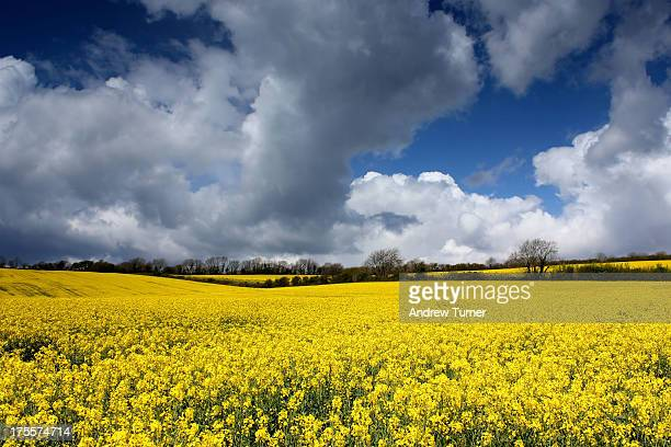 CONTENT] The fields around Hollowcombe Farm in the South Hams near Ermington were full of rapeseed in spring With the owners permission I went...