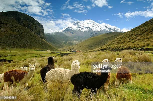 The fields near Chimborazo volcano