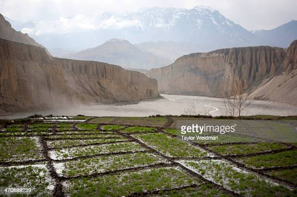 The fields of Tangge are irrigated in the early spring Hidden in the rain shadow of the Himalaya in one of the most remote corners of Nepal lies...