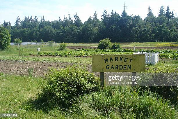 The fields of University of British Columbia , where produce destined to be sold to local restaurants and within the communities surrounding the farm...