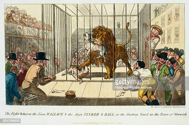 The fight between the lionWallace and the two mastiffs Tinker and Ball in the factory yard in the town of Warwick