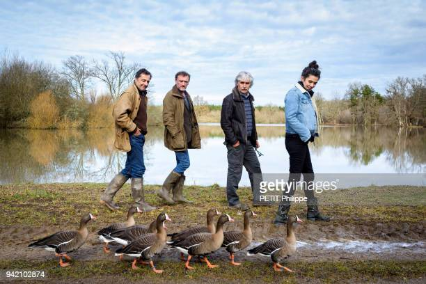 the film director Nicolas Vanier Christian Moullec with a group of dwarf geese from Scandinavia and the actors Melanie Doutey and JeanPaul Rouve are...