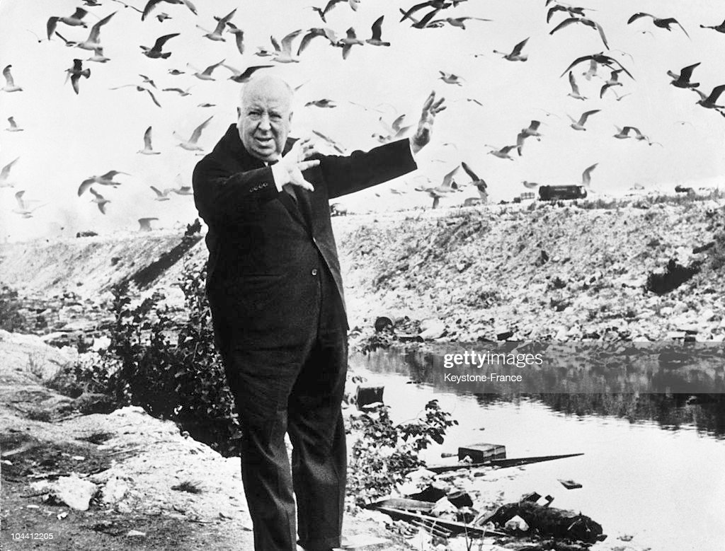 Alfred Hitchcock Surrounded By Seagulls In Denmark In 1966 : News Photo