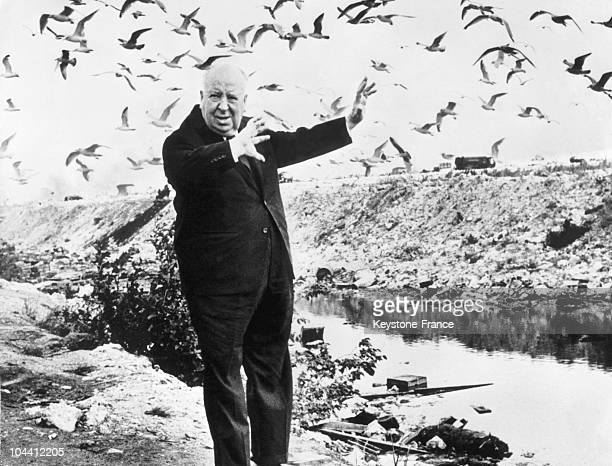 The filmmaker Alfred HITCHCOCK surrounded by birds on a beach in Denmark on October 2 1966