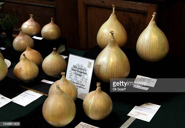 The finalist onions in the RHS 'Silver Knightian Medal' are displayed at the Royal Horticultural Society's London Autumn Harvest Show on October 6...