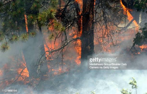 The fire burns near Big Elk Meadows on Sunday.