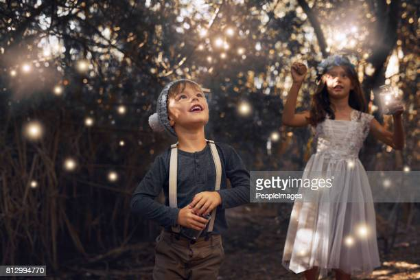 the fireflies have come out to play - fireflies stock pictures, royalty-free photos & images