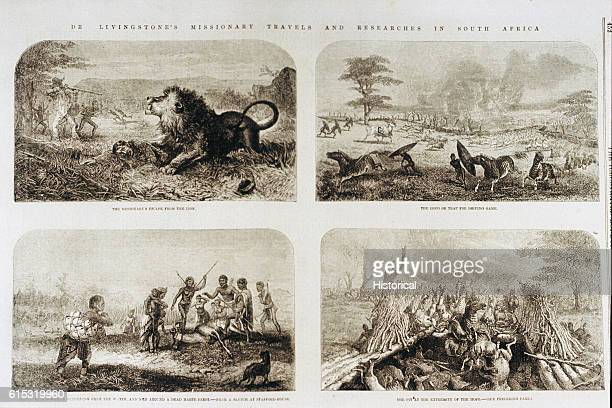 The first panel depicts the attack on Dr. Livingstone by a lion during his travels through South Africa in the 1850s. As the lion pinned him down,...