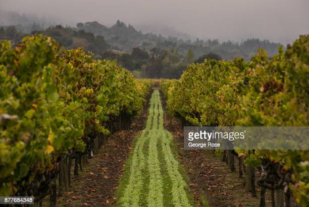 The first rains of the season move into Wine Country on November 2 near Healdsburg California With the arrival of fall tourists by the thousands head...