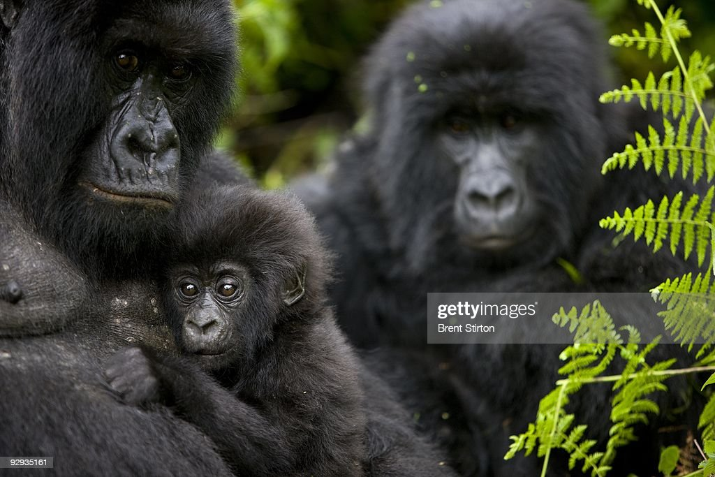 The Rangers of Virunga National Park : News Photo