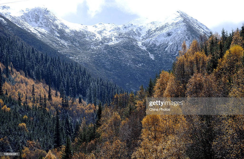 Scenery of miyaluo scenic area after snowfall pictures getty images the first snow of the year sits on mountains at the miyaluo scenic area on october voltagebd Images