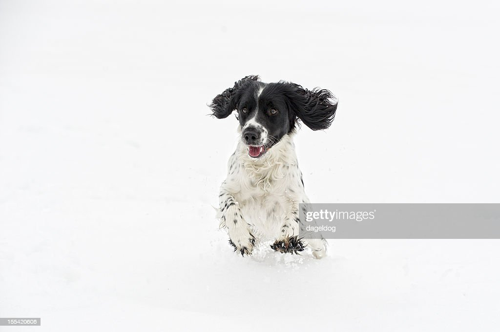 the first snow : Stock Photo