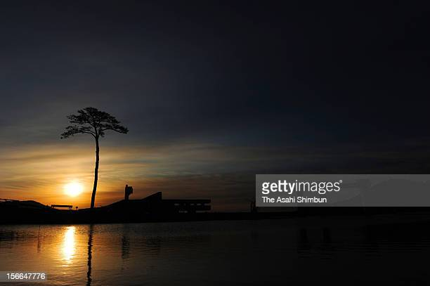 The first sunrise of the year is seen at socalled 'Miracle pine Tree' which survived the tsunami following the Great East Japan Earthquake on January...