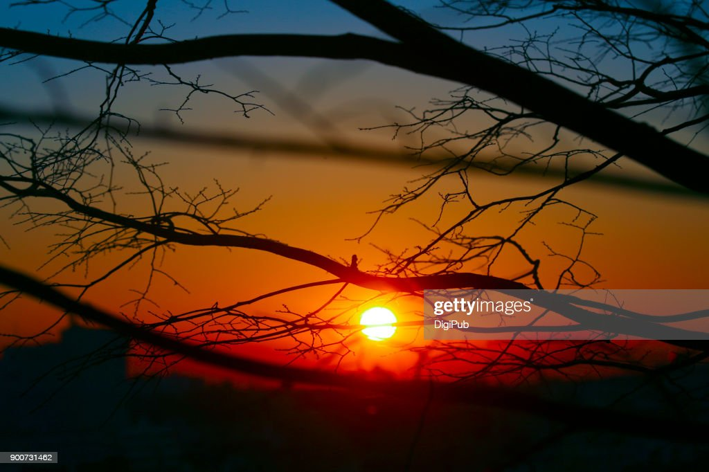 The first sunrise of the year thru bare tree at Nogeyama Park : Stock Photo
