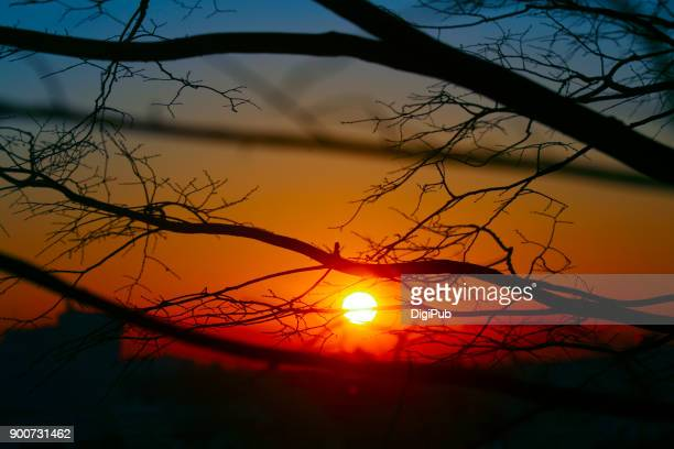 the first sunrise of the year thru bare tree at nogeyama park - new year's day stock pictures, royalty-free photos & images