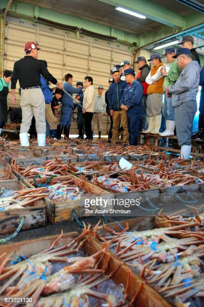 The first zuwaigani snow crabs of the season are auctioned at Shibayama Port on November 6 2017 in Toyooka Hyogo Japan The fishermen sorted their...