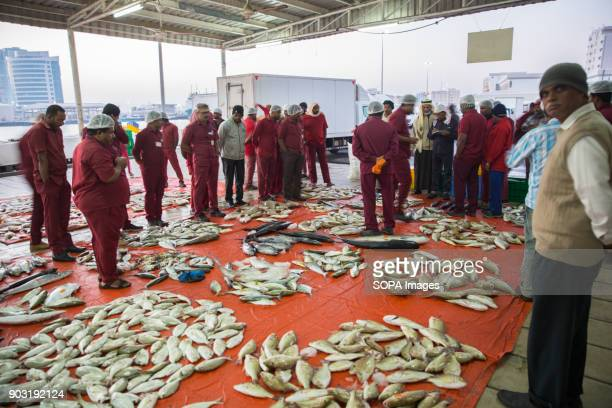 The fish are sorted and displayed for vendors to bid buy and then distributed to the local supermarkets and restaurants Every morning the fishermen...