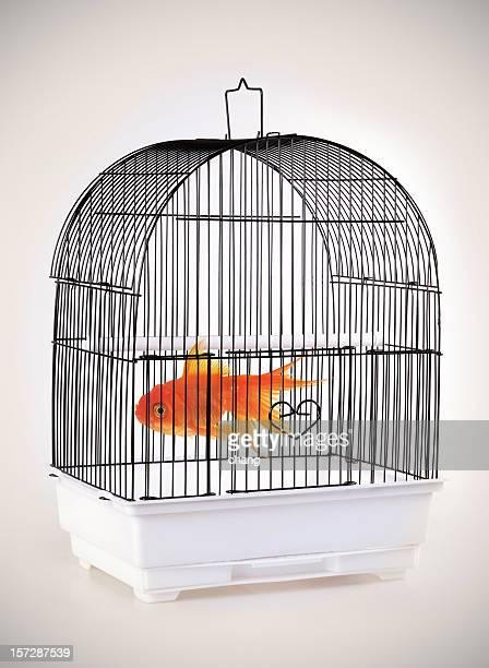 Das Fisch cage