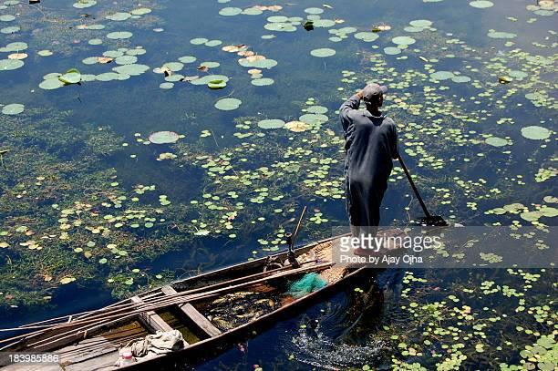the fisherman, srinagar - kashmir valley stock pictures, royalty-free photos & images