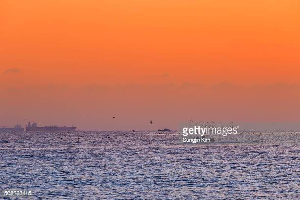 the fishing boats returning with seagulls - sungjin kim stock pictures, royalty-free photos & images